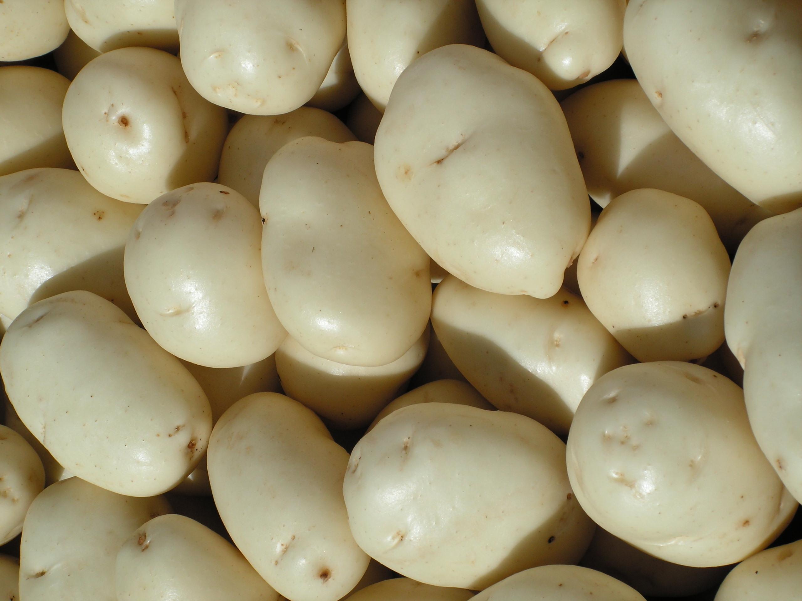 close up whites
